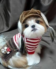Image detail for -dog hairstyles. Interesting Dog Hair Styles AWWW how sweet!!