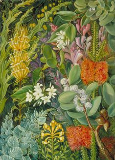 A Selection of West Australian Flowers . by marianne north