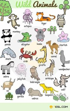 Learn animals vocabulary/ animal names through pictures. Everybody loves animals, keeping them as pets, seeing them at the zoo or visiting … wild Animal Names: Types of Animals with List & Pictures English Lessons For Kids, Kids English, English Study, English Tips, French Lessons, Spanish Lessons, English Vocabulary Words, Learn English Words, English Grammar