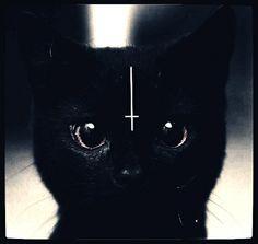 #cat#drug#666#