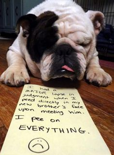 Dogshaming...probably well deserved, but I flippin love that face!