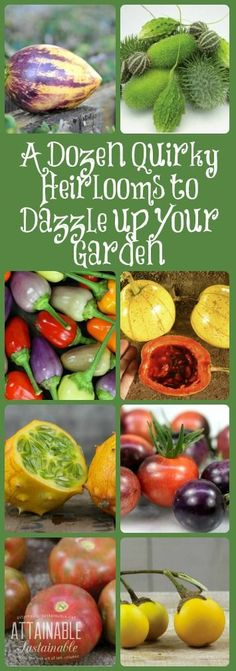 Quirky and unusual heirloom vegetables to add a bit of fabulous to your garden! Garden ~ prepping ~ homestead ~ grow your own ~ seeds ~ vegetables