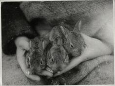 baby bunnies Frm bd: Soulmates