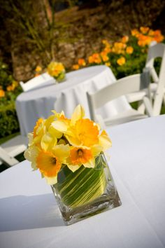 Love daffodils, they're like two flowers in one! Do they come in a more orangey shade?