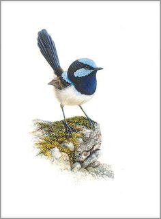 BLUE WREN : The Art of Jeremy Boot, One of Australia's finest wildlife artists Australian Painting, Australian Animals, Australian Artists, Watercolor Bird, Watercolor Paintings, Watercolours, Bird Drawings, Bird Pictures, Wildlife Art
