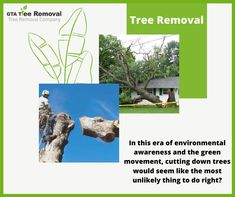 Well, truth be told, sometimes it is the only option. This is especially so if the tree poses a risk to your life, the lives of others and even your property. Call at now. The Lives Of Others, Gta, Things To Do, Environment, How To Remove, Poses, Plants, Life, Things To Make