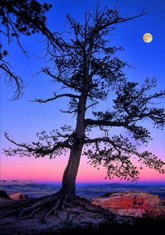 ✯ Bryce Canyon Moon
