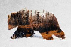 East Urban Home 'Travelling Bear' Graphic Art Print on Canvas Bear Graphic, Graphic Art, Canvas Artwork, Canvas Art Prints, Big Canvas, Canvas Size, Bruder Tattoo, American Black Bear, Bear Art