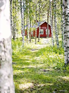 Finnish cottage and the summer light Summer Cabins, Red Cottage, Forest Cottage, Cozy Cottage, Swedish House, Swedish Cottage, Swedish Style, Cabins And Cottages, Cabins In The Woods
