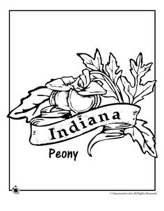 State Flower Coloring Pages Indiana State Flower Coloring Page – Classroom Jr.