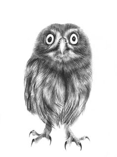 owl art - owl illustration - art print - woodland creature - wall art - 7 x 5 inch  This is an archival print of an original pencil drawing done by