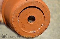 Mealybugs hiding on bottom of houseplant pot Plant Bugs, Plant Pests, White Bugs On Plants, Mealy Bugs, Plant Care, Potted Plants, Houseplants, Container Gardening, How To Get Rid