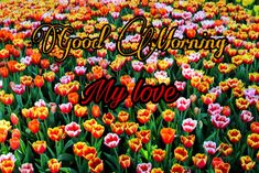 good morning images download Lovely Good Morning Images, Good Morning Images Download, Good Night Image, Image Archive, Good Morning Wishes, Flower Images, Pictures, Photos, Good Nite Images