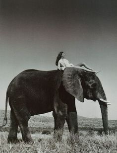 Who doesn't want to ride an elephant.