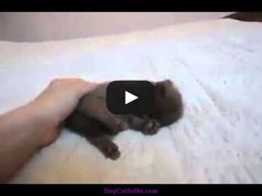 The Dodo - Tiny Kitten Cuddles Video Like Animals, Unique Animals, Animals Beautiful, Animals And Pets, Pretty Cats, Cute Cats, Pretty Kitty, Adorable Kittens, Cutest Puppy Ever