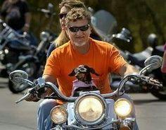 Yeah!! Weenies can ride too!!