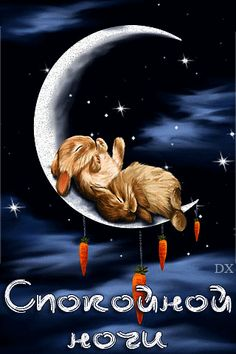 VK is the largest European social network with more than 100 million active users. Happy Weekend Images, Marie Cat, Good Night Sweet Dreams, Hello Weekend, Beautiful Moon, Good Morning Good Night, Timeline Covers, Cute Bunny, Holidays And Events