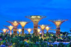 Surreal Photos of Singapore's Solar-Powered Supertrees - My Modern Metropolis