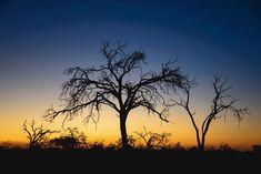Frauke Scholz: Bäume im Sonnenuntergang #wandbild #homedecor #einrichtung #walldecor #wallpicture #poster #africa #africanprint #africanart Poster, Celestial, Sunset, Outdoor, Material, Products, Africa, Print To Canvas, Holiday Photos