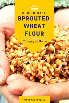 Stone Axe Herbals: How to Make Sprouted Wheat Flour at Home Hongdefa Machinery Co.ltd for wheat flour mill machine. Spelt Recipes, Flour Recipes, Raw Food Recipes, Healthy Recipes, Sprouted Grain Bread, Bread Machine Recipes, Veggie Side Dishes, Raw Vegan, Gluten Free Recipes