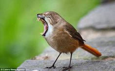 New species: A sparrow and a tabby cat are usually sworn enemies, but they come together i...