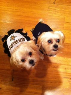 Thanks to Elizabeth Gremillion for us this picture of her dogs! #Saints #NOLA #Dog