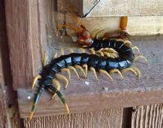 Ызарг - небольшое степное животное, питающееся падалью. Считается образцом трусости.