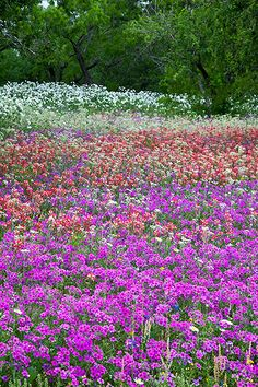 Flowers in the meadow.
