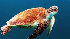 125 Dry Tortugas Np 1992 Ideas Dry Tortugas Dry Tortugas National Park Florida