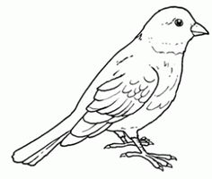 Adult and teenager Coloring pages of birds Flower Coloring Pages, Colouring Pages, Coloring Pages For Kids, Painting Templates, Painting Patterns, Bird Pictures, Colorful Pictures, Bird Embroidery, Bird Silhouette