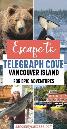 Escape to Telegraph Cove Vancouver Island for Epic Adventures. Telegraph Cove is for adventure lovers! Kayak with orcas in Johnstone Strait. Go grizzly bear viewing in Knight Inlet. Hike the Blinkhorn Trail. And more! There are so many great things to do in Telegraph Cove! | Kayaking with orcas | Bear watching Vancouver Island | #TelegraphCove #VancouverIsland Columbia Travel, Canada Travel, British Columbia, Travel Usa, Vancouver Travel, Vancouver Island, Travel Guides, Travel Tips, Alberta Travel