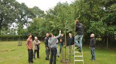 Dessel | Regionaal Landschap Kleine en Grote Nete, Klim de ladder op in de boomgaard en leer fruitbomen snoeien.
