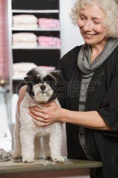 femme senior avec chien: Femme et chien à animal de compagnie salon de toilettage Banque d