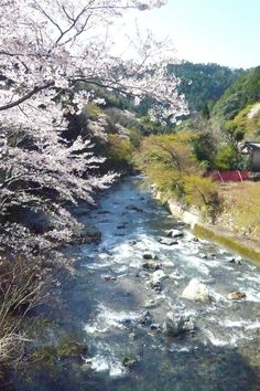 Mt. Atago - Kyoto - Reviews of Mt. Atago - TripAdvisor