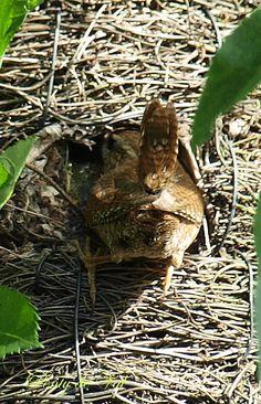 . Nester, Bird Nests, Wrens, Viera, Natural Beauty, Nature, Bb, Photos, Gardens