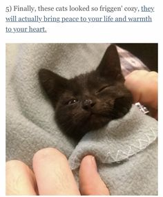 From buzz feeds this week in cats
