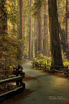 20 The Muir Woods National Monument - an ancient Redwood Forest in Mill Valley, California