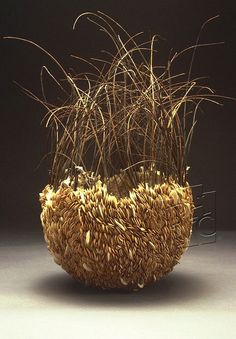 Carrie Nordlund, Untitled Seed Series