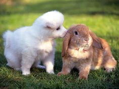 6. Puppy Just Wants To Share A Bit Of Love - 28 Pictures Of Animals Kissing That Will Brighten Up Your Day5