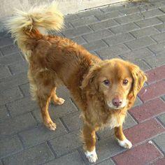 ADOTTA UN CANE ANZIANO: EGEO, bellissimo cagnolino fulvo