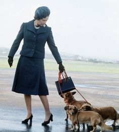Queen with corgi and doxies