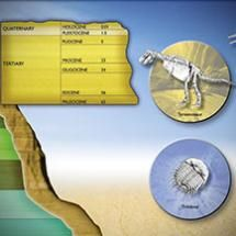 The poster from the 2005 Holiday Lectures on Science, Evolution: Constant Change and Common Threads. Place the fossils in the right geological era, period, and epoch.