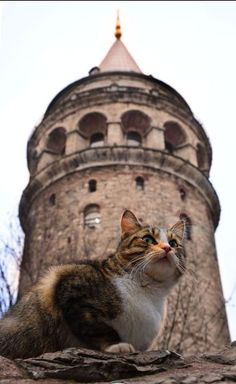 cats of Istanbul 😄 I Love Cats, Crazy Cats, Cool Cats, Pretty Cats, Beautiful Cats, Animals And Pets, Cute Animals, Tier Fotos, Cat Boarding