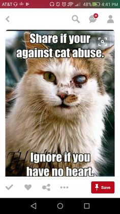 "I was against Cat Abuse the first time I posted this.- I'm STILL against Cat Abuse. In fact, I can't imagine NOT being against it. OP: ""I think that this cat is still cute. Animals And Pets, Funny Animals, Cute Animals, Baby Animals, Crazy Cat Lady, Crazy Cats, I Love Cats, Cute Cats, Pets"