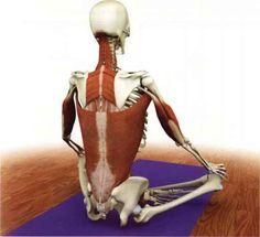Afbeeldingsresultaat voor latissimus dorsi en yoga Latissimus Dorsi, Yoga