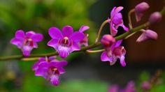 Não, nenhuma orquídea fica 12 meses com flor. Você só terá flores o ano todo se escolher ao menos uma espécie que floresça em cada um d...