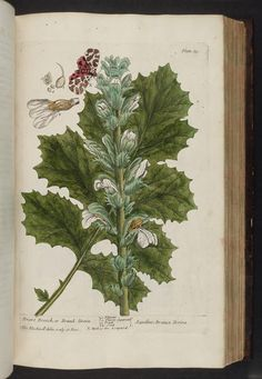 1737 - A curious herbal containing 500 cuts, of the most useful plants, which are now used in the practice of physick - by Elizabeth Blackwell