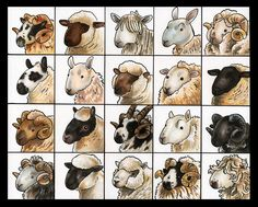 Sheepie poster for the Sheep and Wool festival this weekend. 20 different kinds of sheepies; from left to right 1) Scottish Blackface 2) Oxford Down 3) Lincoln Longwool 4) Blue faced Leicester 5) Merino 6) Kerry Hill 7) Border Leicester 8) Dorset Down 9) Romney 10) Suffolk 11) Hill Radnor 12) Clun Forest 13) Jacob 14) Cheviot 15) Black Welsh Mountain 16) Herdwick 17) Hampshire 18) Southdown 19) Rough Fell 20) Dartmoor Done in copic markers. Enjoy!