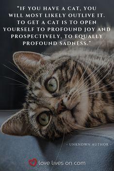 Super losing a pet quotes cat 58 ideas Pet Quotes Cat, Pet Loss Quotes, Animal Quotes, Pet Poems, Cat Sayings, Crazy Cat Lady, Crazy Cats, Losing A Pet Quotes, I Love Cats