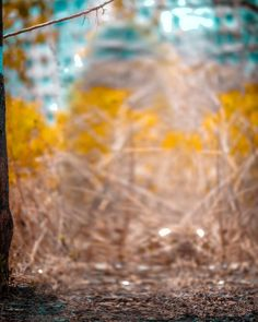 Picsart Background For Editing Best 50 CB Backgrounds Blur Image Background, Background Wallpaper For Photoshop, Desktop Background Pictures, Blur Background Photography, Photo Background Editor, Studio Background Images, Light Background Images, Picsart Background, Natural Background